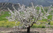 Enclaves en Málaga donde sacar las mejores fotos esta primavera