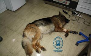 Investigan a un hombre en Málaga por arrastrar y golpear a un perro enfermo que acabó muriendo