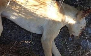 La muerte a tiros de un perro salvaje reaviva la polémica en Churriana
