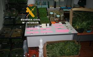 Intervienen 2.644 plantas de marihuana en dos viviendas de Mijas
