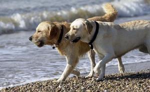 Los animales no pueden predecir terremotos