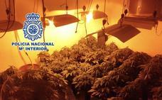 Incautadas 256 plantas de marihuana cultivadas en tres invernaderos ocultos en viviendas de Málaga
