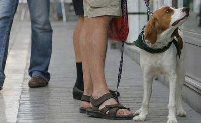 ¿En qué casos me puedo librar en Málaga de la multa si mi perro no está censado?