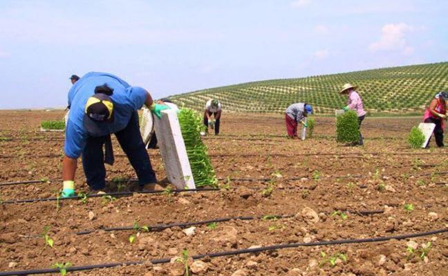 La Ley de Agricultura andaluza da carpetazo a la reforma agraria emblema del primer gobierno del PSOE