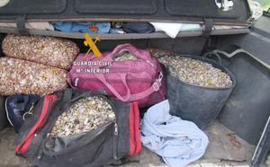 Intervienen en Marbella y Manilva 340 kilos de coquinas y chirlas transportadas de manera ilegal