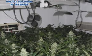 Desmantelan tres laboratorios de marihuana en un bloque de la zona norte de la capital
