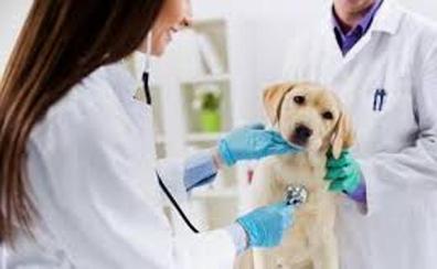 Abogados ofrecen unas charlas sobre la defensa del personal veterinario