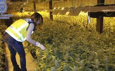 Un aviso por una discusión de pareja lleva a localizar una plantación de marihuana en Málaga