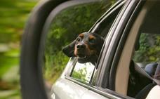 ¿Puede mi perro subir al taxi en Málaga? ¿Y al autobús?