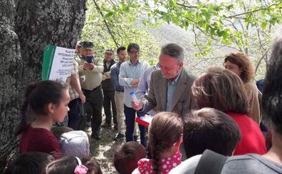 La Junta de Andalucía inicia una nueva suelta de parásitos para luchar contra la avispilla del castaño en el Valle del Genal