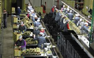 El exceso de oferta y la caída de precios afecta también al espárrago de Antequera