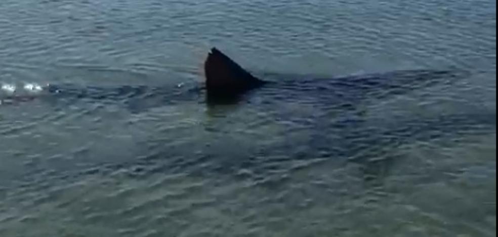 Avistan un tiburón en Fuengirola y prohiben el baño durante más de cuatro horas