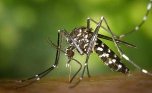 Los expertos lanzan una advertencia sobre los mosquitos tigre: llegarán «fuertes plagas»