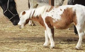 El PSOE corrige su postura sobre los ponis en la feria de Málaga