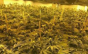 Detienen a 21 personas en Málaga en una operación contra el tráfico de marihuana hacia Holanda