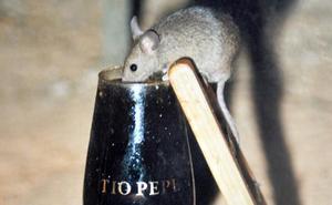 Los alegres ratoncillos de Jerez