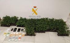 Detenido en Alhaurín de la Torre por llevar en su coche cajas con 915 plantones de marihuana