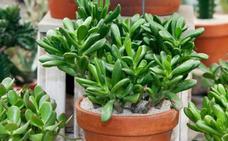 Quince plantas capaces de sobrevivir a los cuidadores más negados