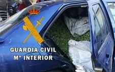 Cae en Málaga una banda dedicada al robo de aceitunas en fincas agrícolas de Andalucía