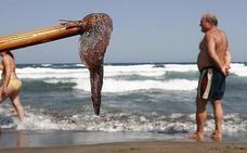 El Aula Del Mar registra 40 avisos por medusas en los últimos tres meses