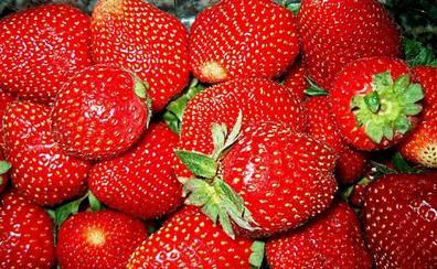 Qué hay de cierto en las fresas infectadas de Hepatitis A
