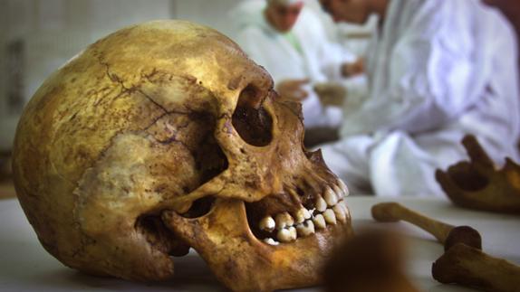 Se confirma que el cráneo humano evolucionó con el bipedalismo ...