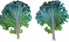 El kale, la verdura que todos quieren comer