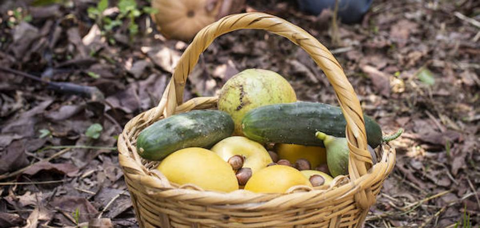 Del campo malagueño a la mesa: hortalizas sin intermediarios