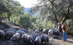 Jornadas de carnes ibéricas de castaña en El Pimpi