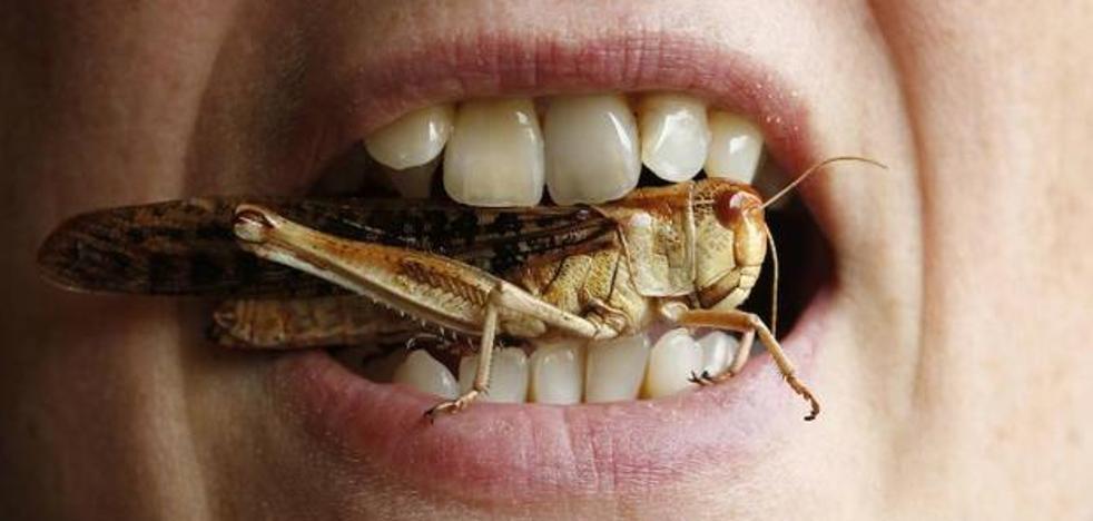 Yo no como insectos