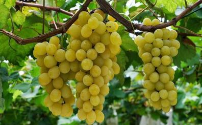 Frutas con sabor a verano en Málaga (y dónde comprarlas)