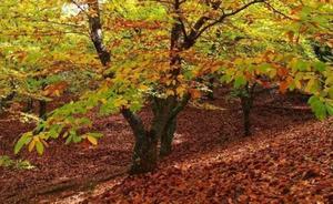 Ruta gastronómica: El goloso otoño del Genal