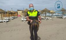 Loggerhead turtle stranded on a Costa beach is rescued