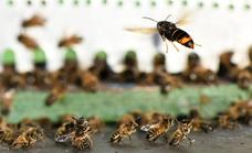 Experts warn of increase in 'aggressive' wasp numbers in Spain