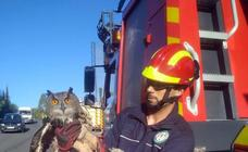 Marbella firefighters swing into action to rescue an owl trapped on a San Pedro golf course