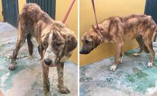 Goatherder banned from working with animals for mistreating dogs