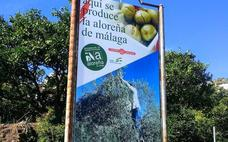 Tapas with Aloreñas: the 'little apples' from Malaga
