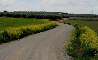 Senderismo Málaga: Ruta de los Cultivos Ecológicos