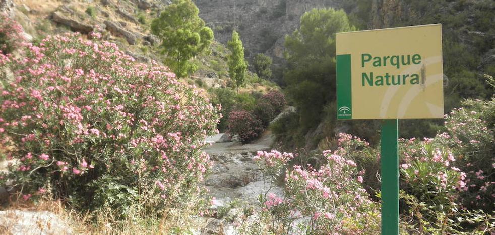 Senderismo Málaga: Ruta del Río Higuerón