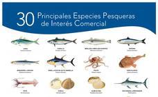El verano es tiempo de sardinas en Málaga
