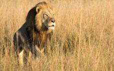 A la caza del cazador de 'Xanda'