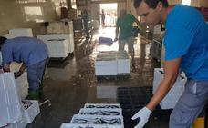 La flota de Málaga captura este semestre 359.000 kilos menos, pero factura 1,1 millones más
