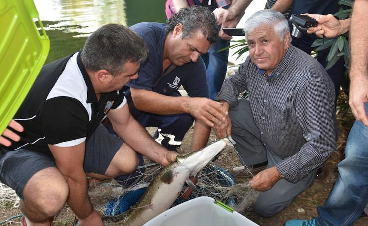 En fotos, la captura del pez cocodrilo de Marbella
