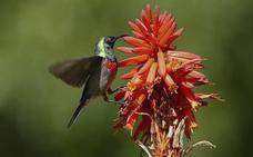 El pico de los pájaros podría haber evolucionado por los comederos de jardín