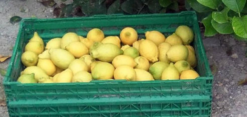 Cae un grupo dedicado a robar en cultivos del Guadalhorce para vender a fruterías y mercadillos