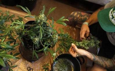 Detenidas 46 personas por cultivar marihuana en Málaga e intervenidas más de 4.000 plantas