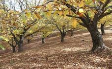 En noviembre, la primavera de cobre del Genal