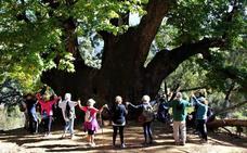 Abrazo colectivo al Castaño Santo de Istán por su declaración como Monumento Natural de Andalucía