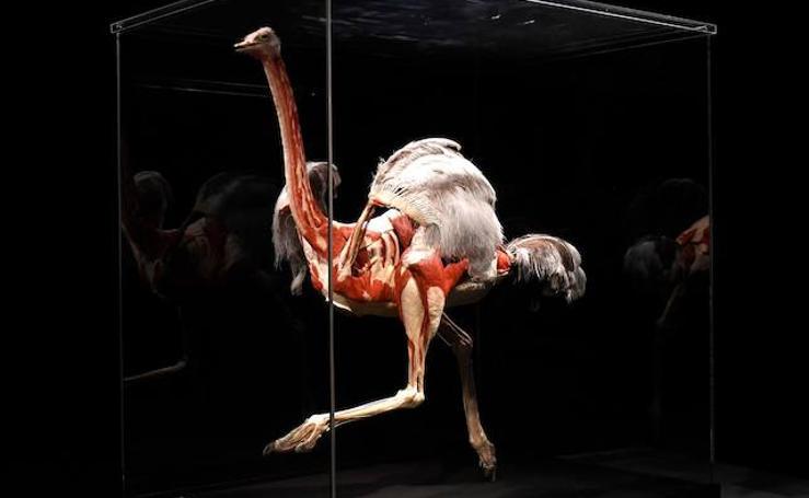'Animal inside out', un safari anatómico en Sevilla