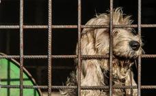 Cae una organización que robaba por encargo perros de caza en Málaga